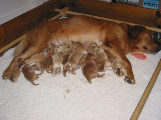 Lisa's dogs 755
