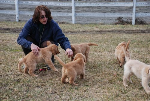 Lisa with pups Jan '08